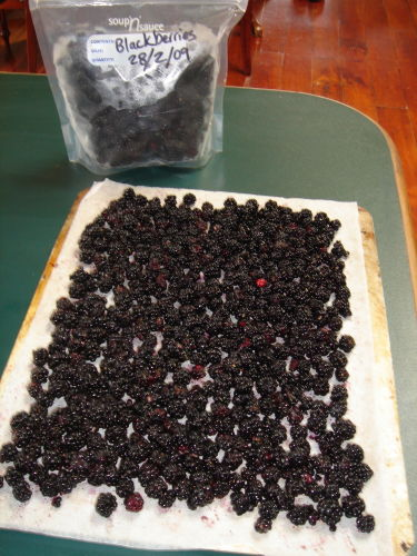 blackberries_frozen